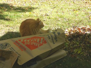 Shakespeare and Leaves