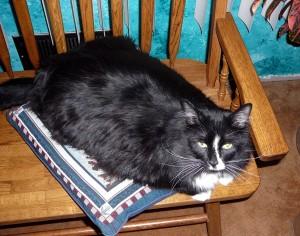 Hemningway on Pillow