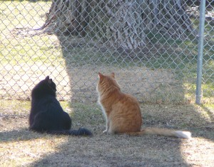 Shakespeare....have you seen Axel outside lately?  I wish he'd come out so we could run up and down the fence together.