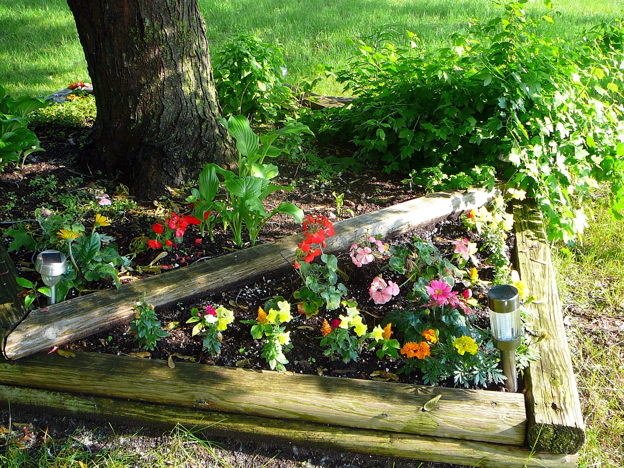 Digging in the dirt leads to flowers twocatsviews - Flowers for the front yard ...