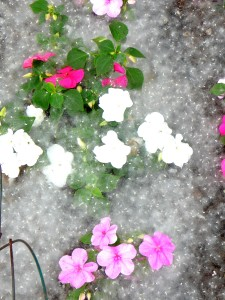 Look....the flowers are covered in snow!