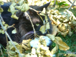 Here I am hiding in the tree branches.  I showed Mom which branches needed cutting.