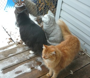 Just three guys hanging out on the deck...