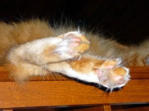Sleepy tufty orange toes!