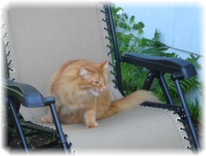 This is my outdoor chair and if Mom isn't here, I don't get to sit in it and that makes me not happy!