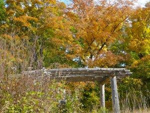 Arboretum 2014 112