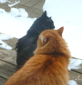 Even if we look in opposite directions, the white stuff is still there!