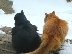 Hey......where did all that white stuff come from?  Who said it could fall on our yard?