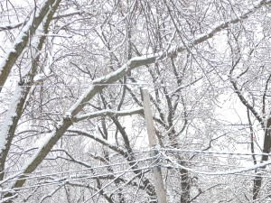 The branches are wearing layers of white.