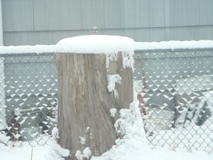 Poor old stump is wearing snow again.