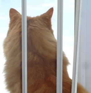 This is what I do during the day.  I'm not in jail.  I'm in the window checking to make sure the yard is safe.