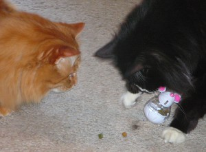 Shakespeare, you just hit it and the mouse gets scared and drops treats for us!