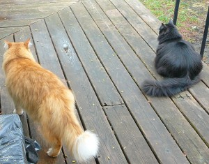 Here we are both outside checking the frontier.