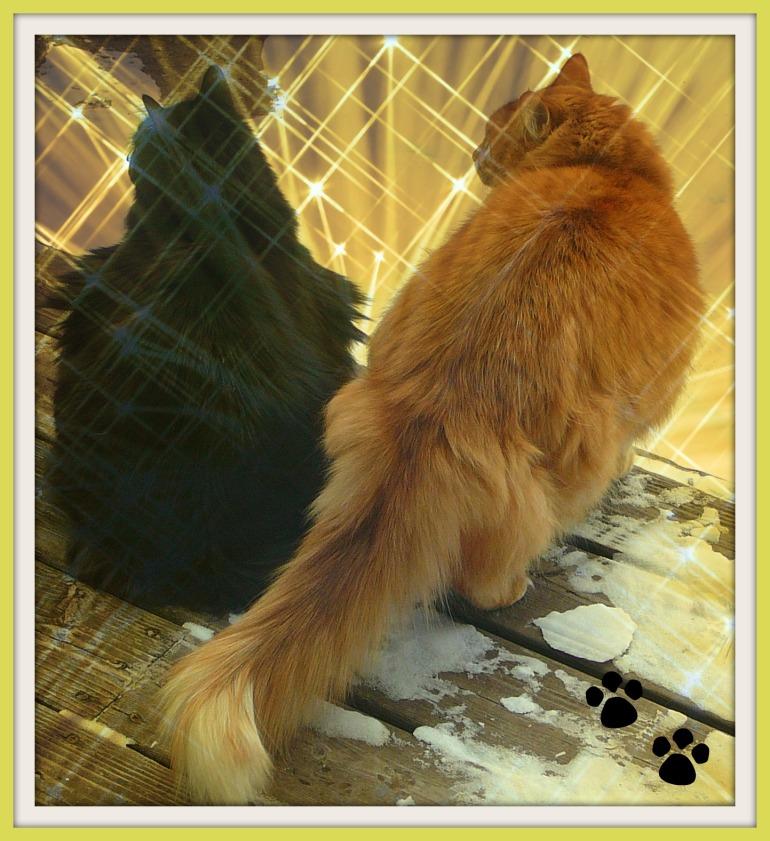 Sparkle Cats