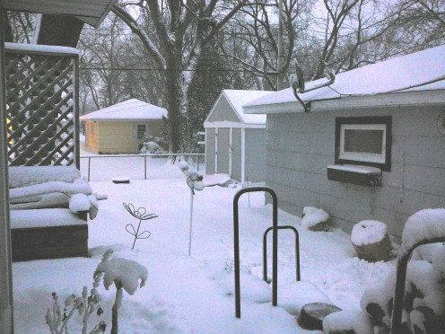 The backyard is all white now.