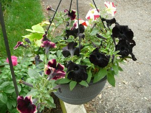 Here's another hanging basket that Mom made.