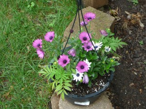 These are some pretty little flowers in a basket.