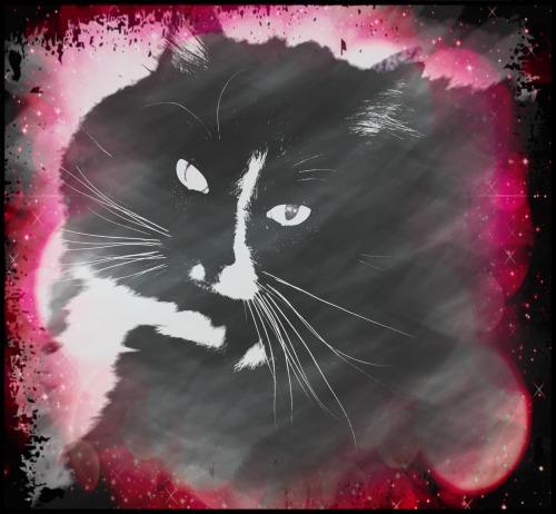 hemingway-caturday-art