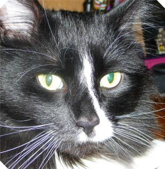 hemingway-bright-eyes