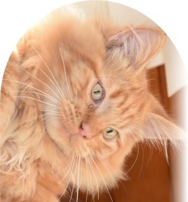 steinbeck-bright-eyes
