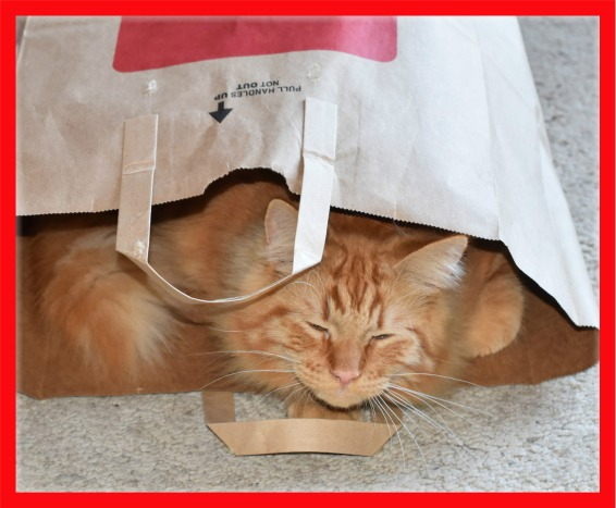 Cat in a Bag 2.jp