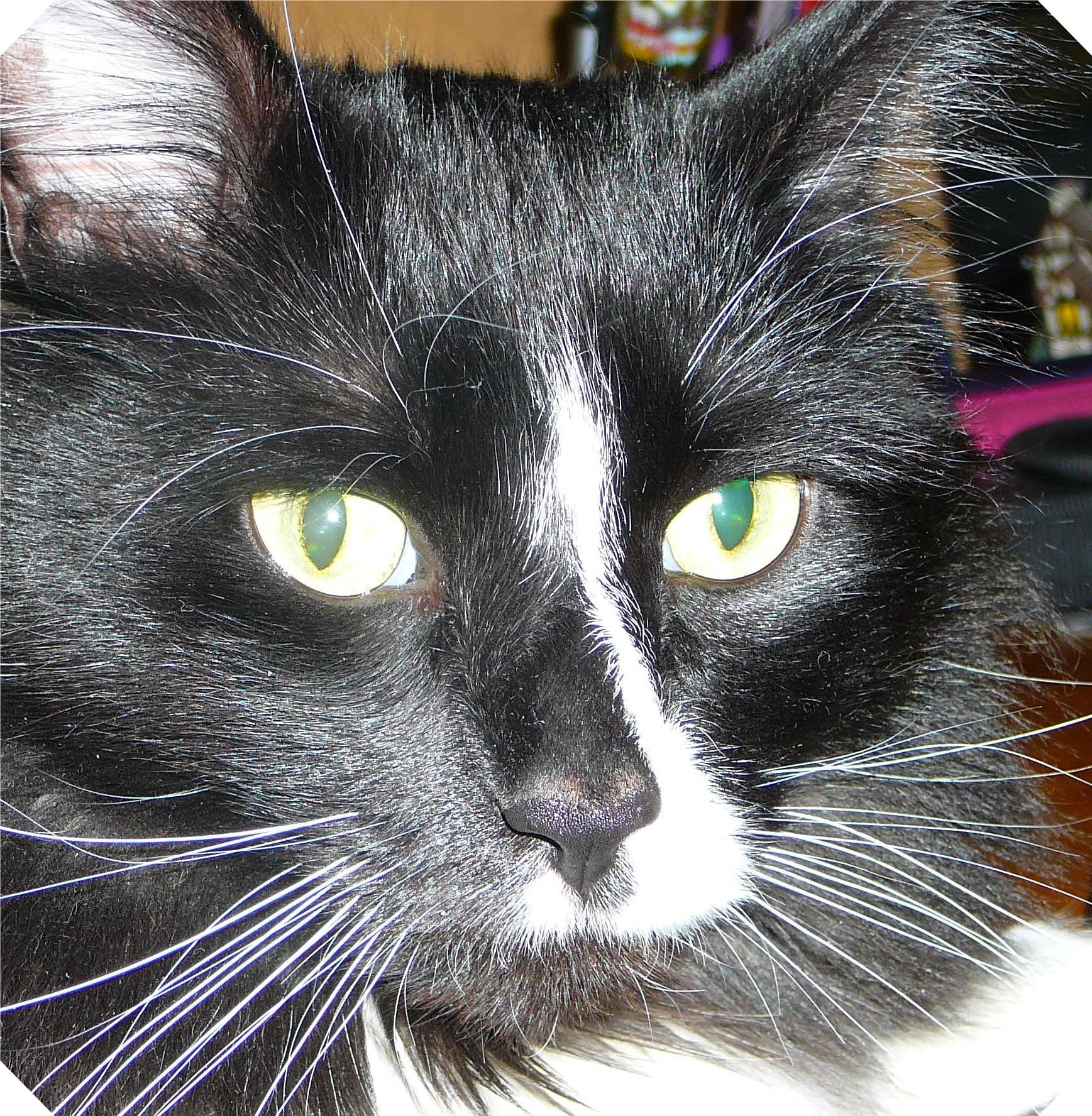 Hemingway Bright Eyes