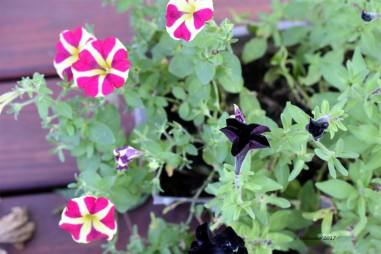 regular flowers