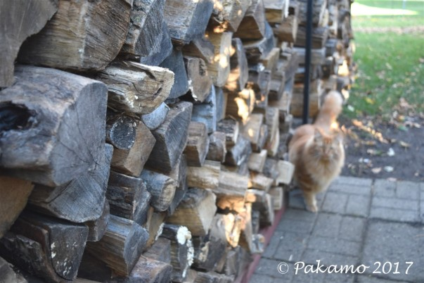 Big stack of wood