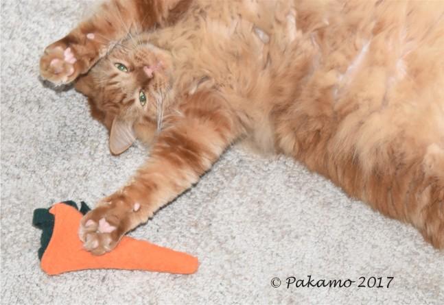 My Carrot