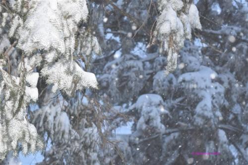 snowstorm3 - Copy