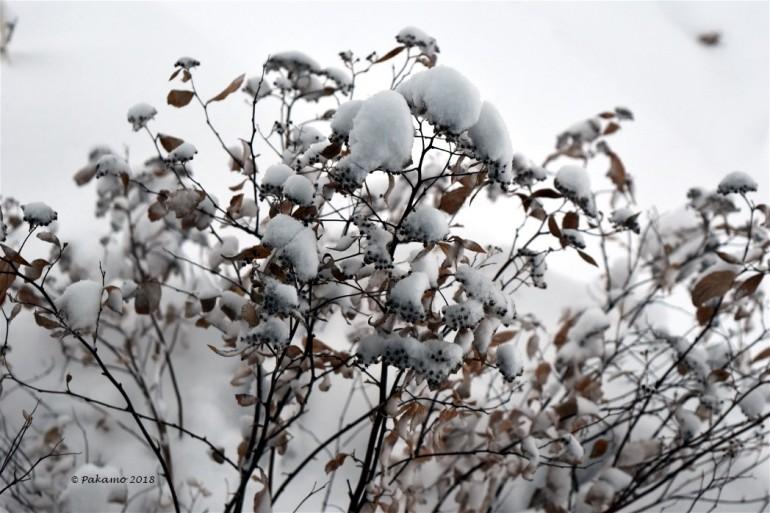 snowstorm4 - Copy
