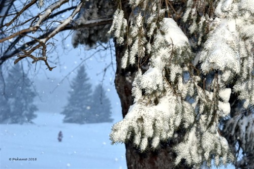 snowstorm5