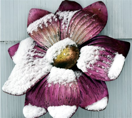 frosted flower